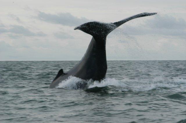 Avista cetáceos con Hotel Misiana
