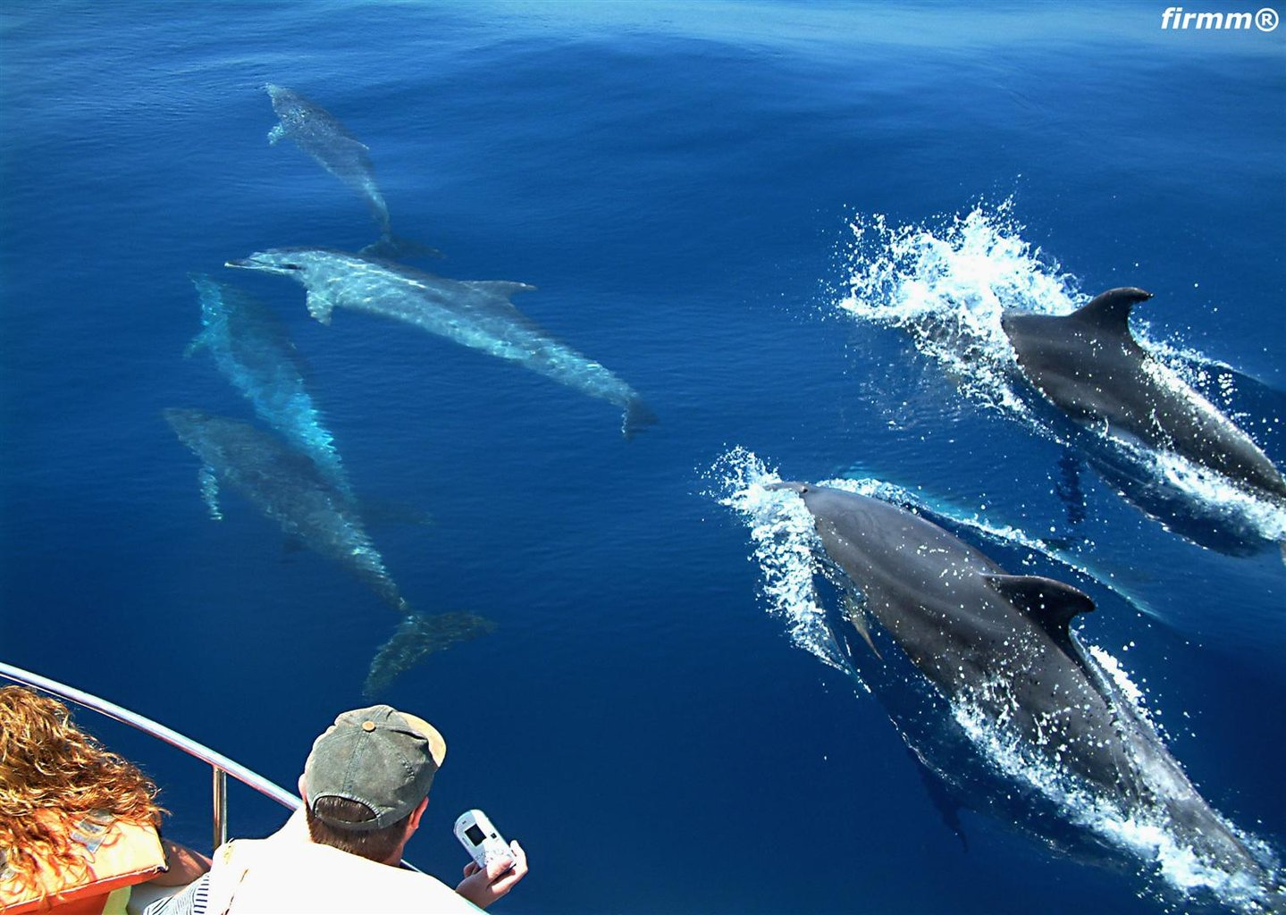 Mira delfines con Hotel Misiana